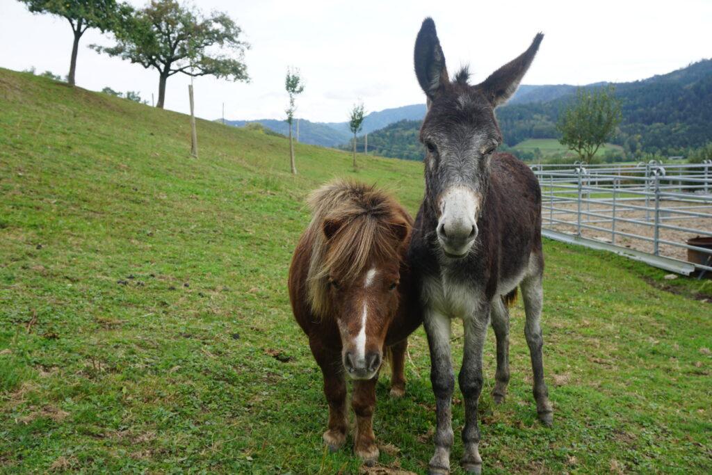 Die zwei Freunde Cinderella und Joshy