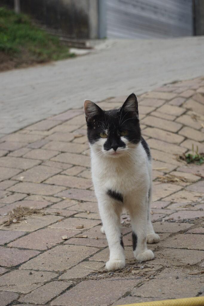 Die Katze Missy